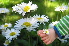 warna warni bunga daisy