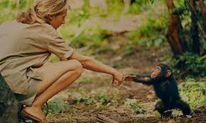 Vita di Jane Goodall con scimpanzè in tv - La Sicilia