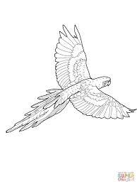 Afbeeldingsresultaat Voor Kleurplaat Vliegende Papegaai Png