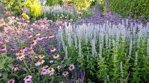 top critter and deer resistant plants