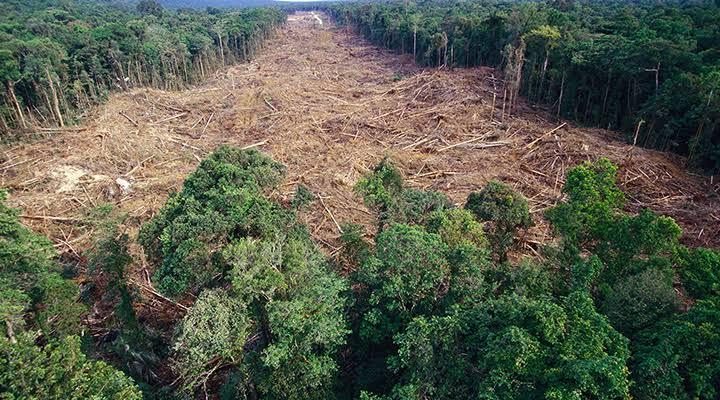 """Resultado de imagem para desmatamento na amazonia"""""""