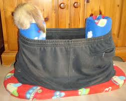 diy ferret pants condo petdiys