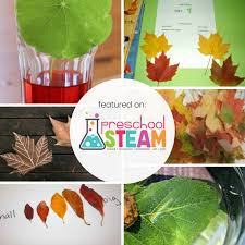 leaf science experiments for preers