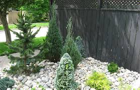 landscaping with conifers the garden
