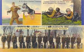 Image result for the need for trained military dogs