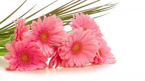 ورود رائعة الجمال صور زهور ساحرة خلابة بالوانها اروع روعه