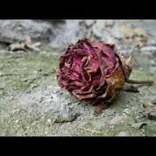 ratu quotes bunga wattpad