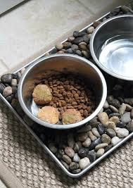 homemade raw dog food how to make raw