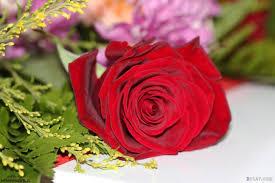 أجمل صور ورود حب ورومانسية لطيفة جدا Red Roses Rose Flowers