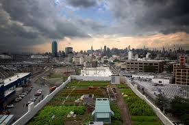 urban rooftop farms