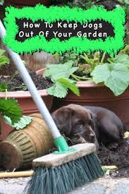 How To Keep Dogs Out Of Garden Areas Dog Repellents Vs Training