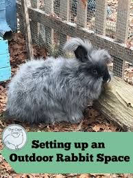 Setting Up An Outdoor Rabbit Space The Cape Coop