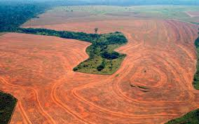 Destruction of Brazilian Amazon spikes by almost a third | Al ...