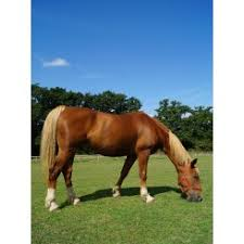 We Love Horses at Redwings Horse Sanctuary - Ada Cole Visitor Centre - What  To Do With The Kids