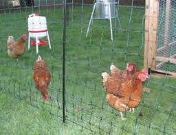 Poultry Fencing Hexagonal Wire Mesh Chicken Netting Aiji China Products