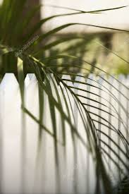 Palm Leaf Over Picket Fence Stock Photo C Iofoto 9435395