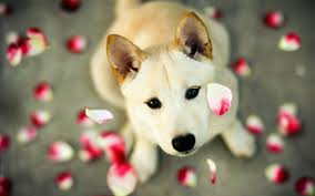 beautiful dog wallpapers top free
