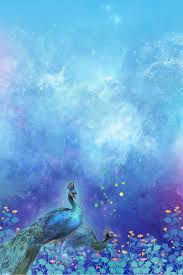 خلفية زهرة الطاووس الأزرق الجميل أزرق جميلة زهرة صورة الخلفية