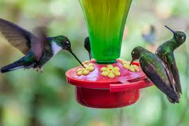 homemade hummingbird food recipe a