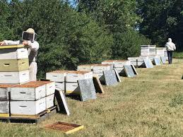 Manitoba S Honeybee Population Down Slightly Due To Covid 19 Steinbachonline Com