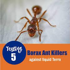 38+ Terro Bug Killer  Pictures