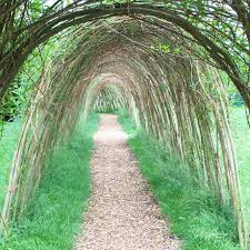 Living Willow Tunnel Natural Fencing