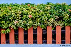 Orange Color Wooden Fence And Ixora Plants Buy This Stock Photo And Explore Similar Images At Adobe Stock Adobe Stock