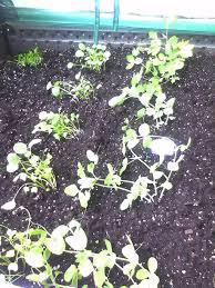 quick raised vegetable gardens for