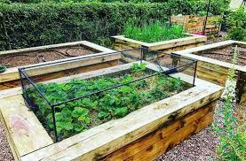 guide to raise bed vegetable gardening