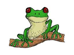 Hand Drawn Vector Cartoon Illustration Of Tree Frog Wall Decal Pixers We Live To Change