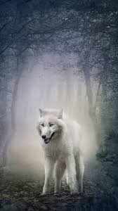 white wolf iphone wallpapers top free