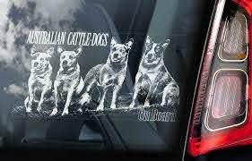 Australian Cattle Dogs Car Sticker Blue Heeler Window Sign Decal Gift Pet V01 Ebay