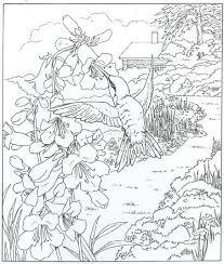 Kids N Fun Kleurplaat Natuur Rondom Het Huis Kolibri