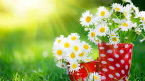most beautiful flowers wallpapers for