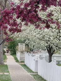 Via Pinterest White Picket Fence Landscaping Around Trees Backyard Fences