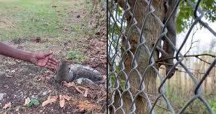 Squirrel Rescue Video A Squirrel Stopped This Woman For Help And Led Her To Injured Baby Squirrel In Pulaski Virginia Police Department Caught On Camera Cbs News