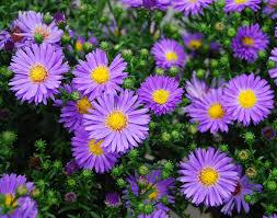 top plants to attract erflies to