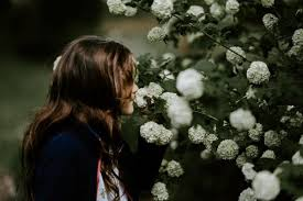 selain mawar bunga ini juga punya tanda cinta jika dikasih ke cewek