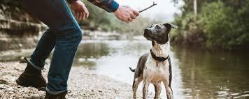 Dogwatch The Original Hidden Dog Fence Company