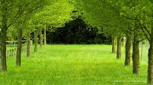 hd nature background images for