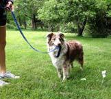 Https Www Extremedogfence Com Wp Content Uploads 2018 08 Extreme Dog Fence User Manual Pdf