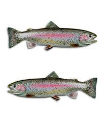Rainbow Trout Fly Fishing Stream Decal Salmon Sticker