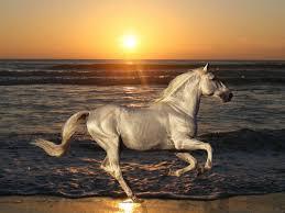 صور وخلفيات اجمل الخيول العربية الاصيلة في العالم 2020