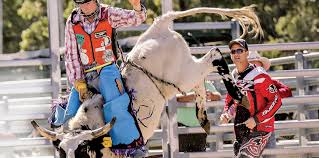 Rodeo enthusiasts to saddle up at Gympie Show | Stanthorpe Border Post