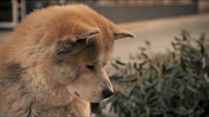 Hachiko : IL Tuo Migliore Amico - Ritrovarsi... (Scena Finale ...