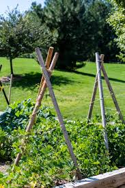 how to create a trellis in your garden