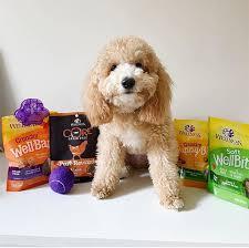 3 ways to celebrate dogust wellness