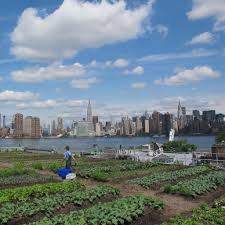 6 amazing rooftop gardens in nyc