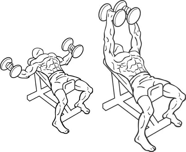 """Image result for Dumbbell Incline Fly"""""""