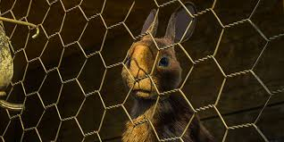 The First Trailer And Release Date Of Bbc S Watership Down Mini Series Is Finally Here Hello